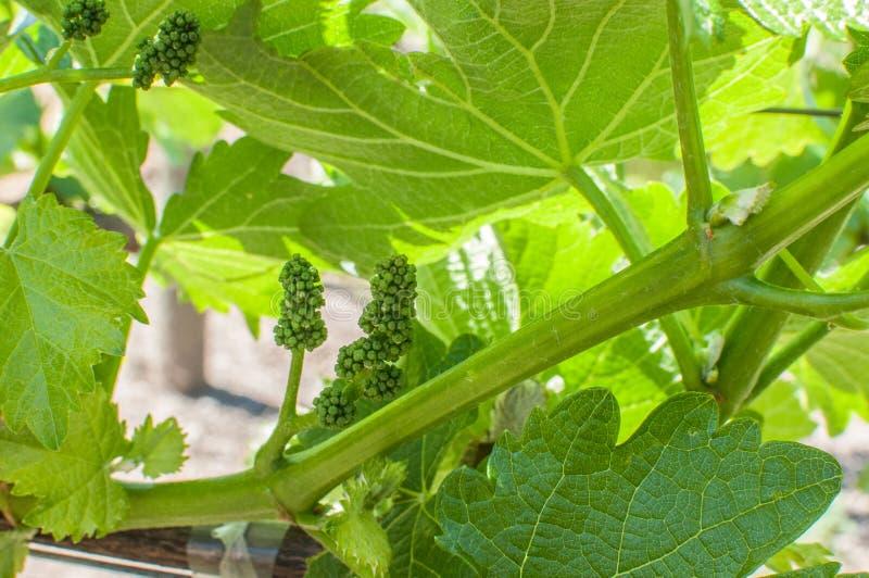 Год сбора винограда 2015 стоковое изображение rf