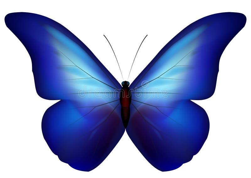 голубая бабочка иллюстрация штока