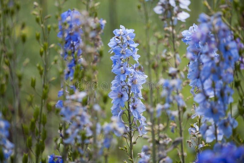 Голубая красивая предпосылка цветка стоковые изображения rf
