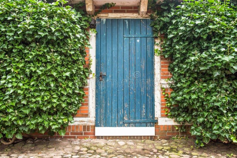Голубая старая деревянная дверь построенная окруженной плющом в каменной стене волны солнца лета места ладоней стоковые фотографии rf