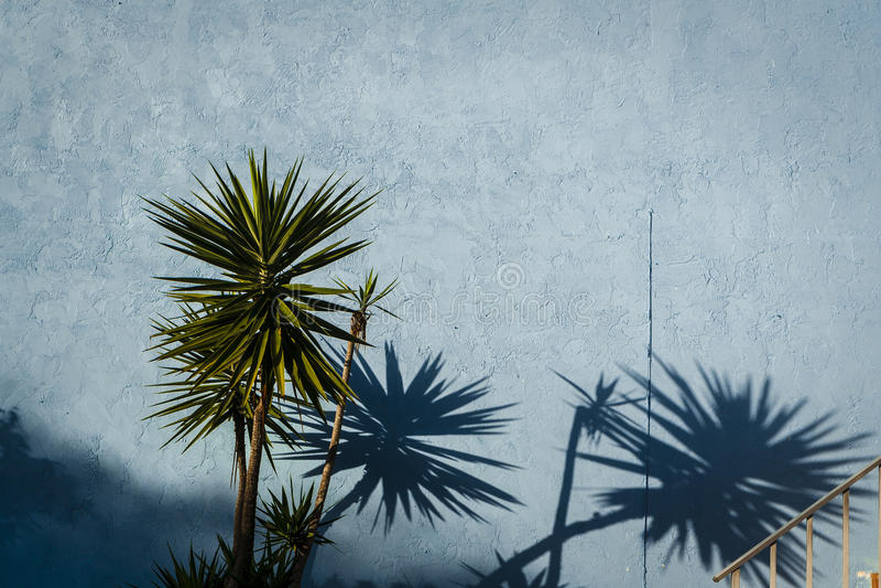 Голубая стена & тропические заводы стоковое фото