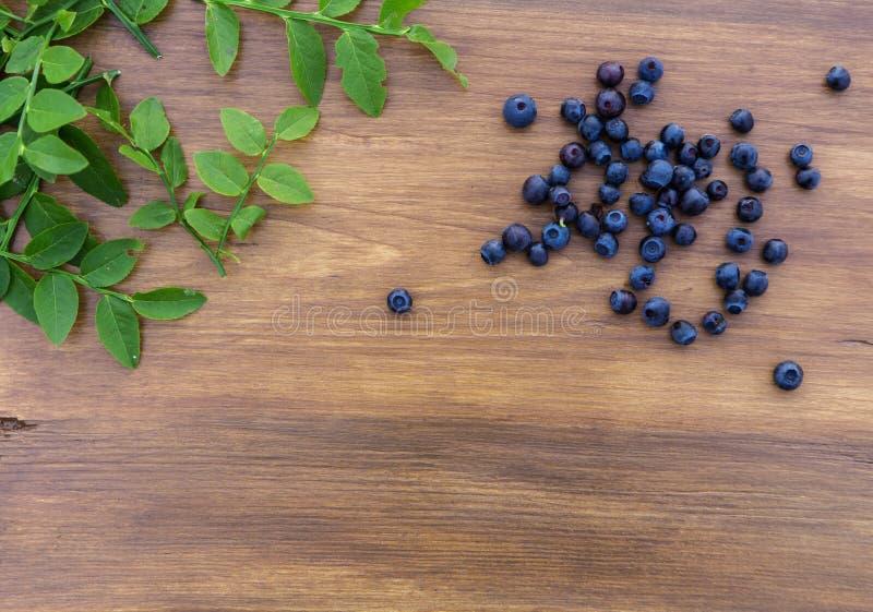 Голубика леса стоковое изображение