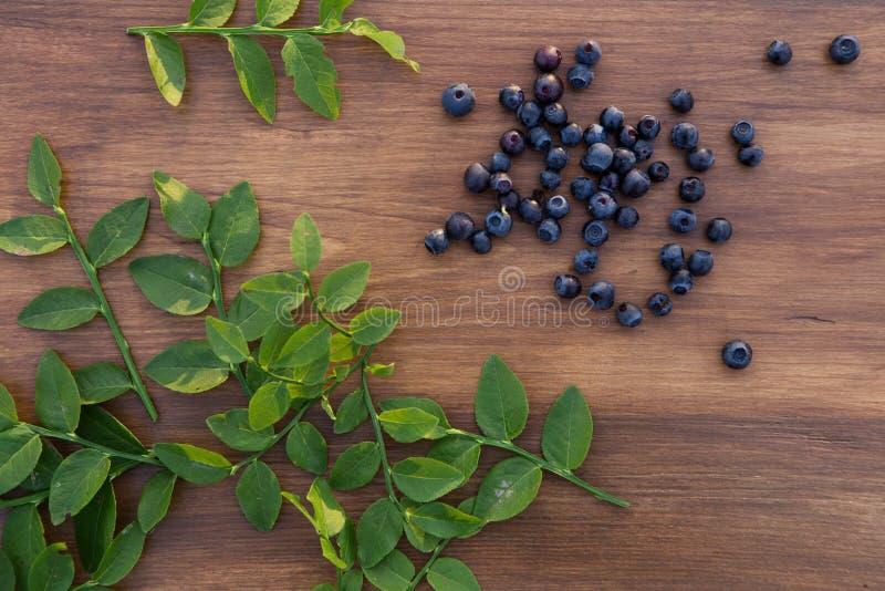 Голубика леса стоковое фото
