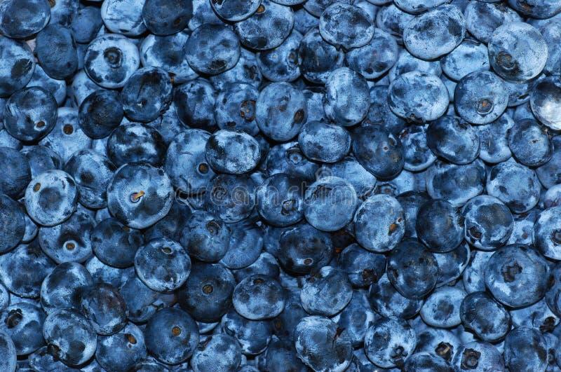 Голубики стоковое изображение rf