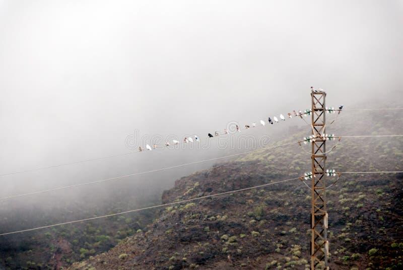 Голуби в тумане стоковое изображение rf