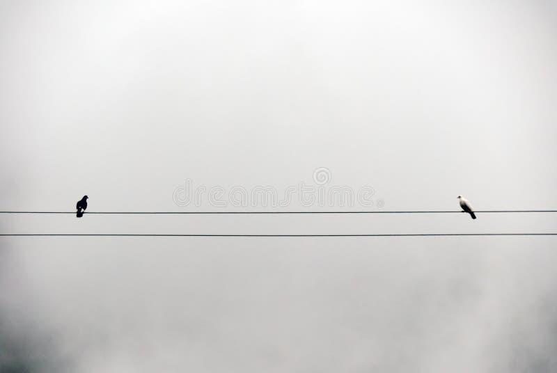 Голуби в тумане стоковая фотография rf