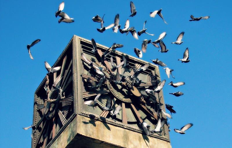 Голуби летают вокруг башни с часами Баку стоковые изображения rf