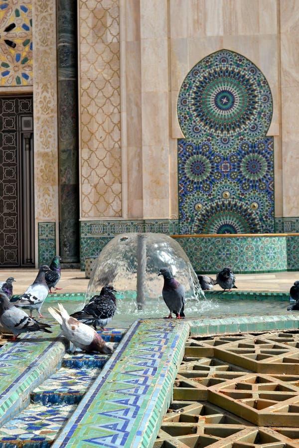 Голуби играя с водой в фонтане мечети (ориентация портрета) стоковое изображение rf