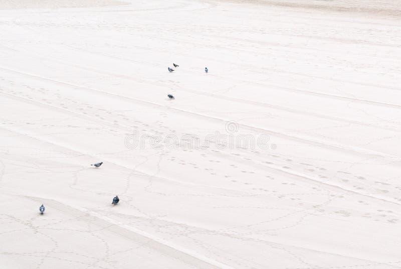 Голуби на песке стоковая фотография rf