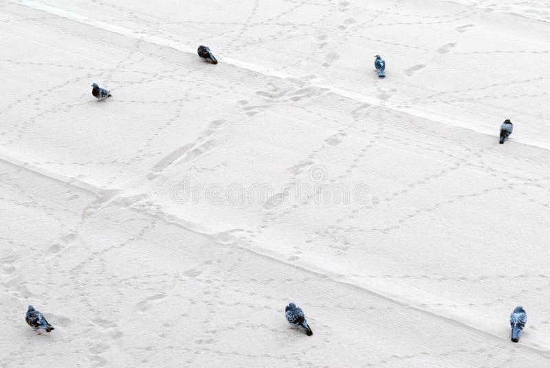 Голуби на песке стоковое фото
