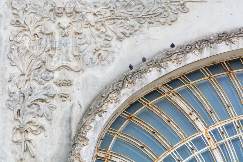 Голуби на старом здании города 3 черных голубя сидят дальше стоковые фотографии rf