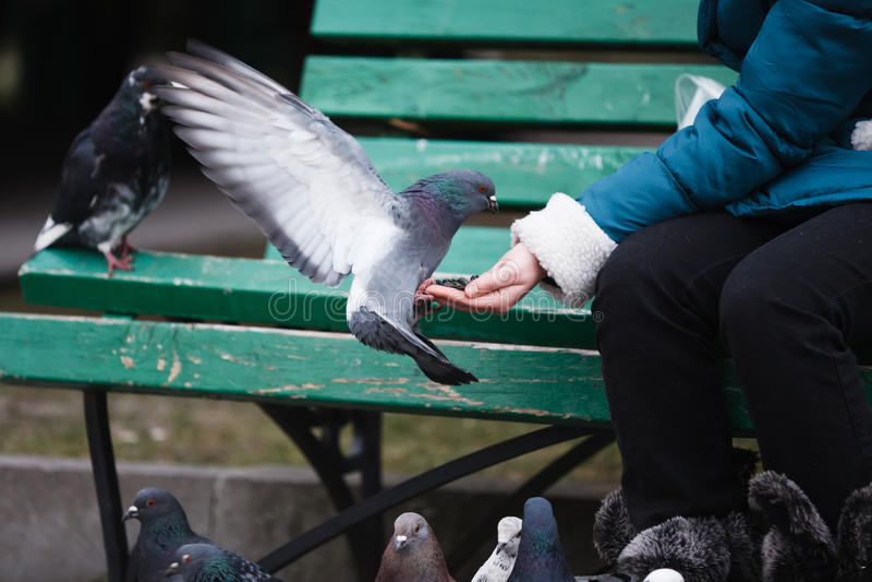 голуби подавая девушка стоковое фото rf