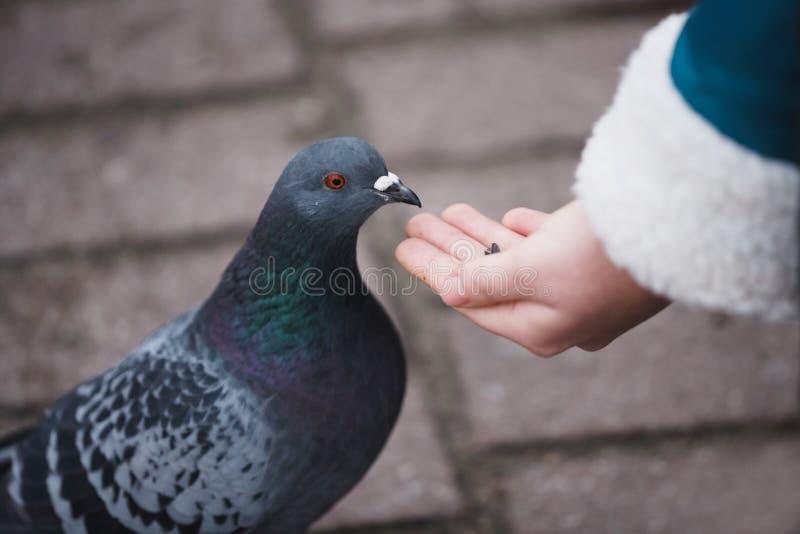 голуби подавая девушка стоковое изображение