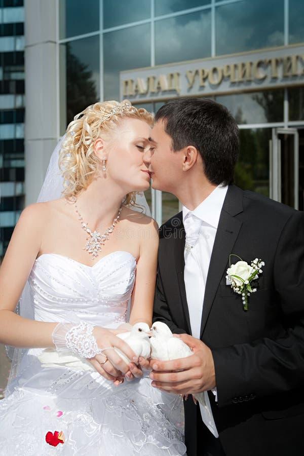 Голуби свадьбы в руках groom стоковое изображение