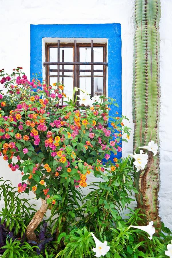Голубое и белое окно стоковое изображение
