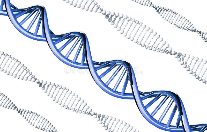 Голубое дна выдающее, доминантный ген, изолированный на белой предпосылке иллюстрация вектора