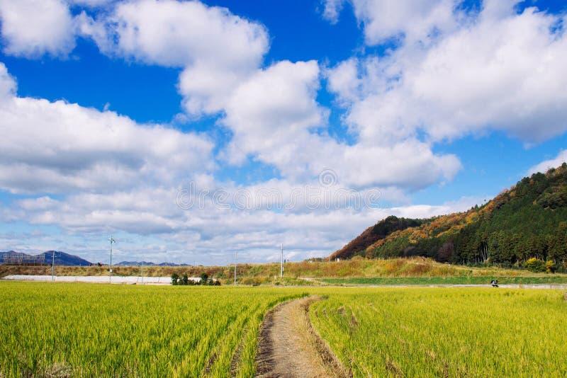 голубое небо зеленого цвета злаковика стоковое изображение