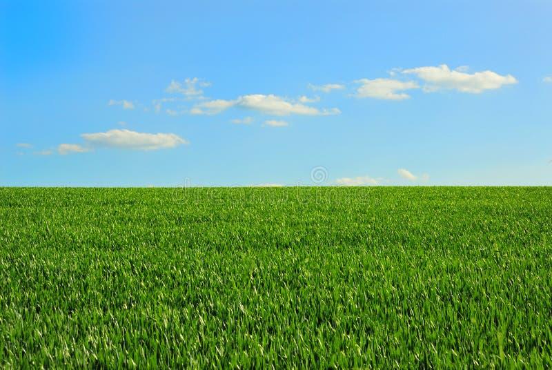 голубое небо зеленого цвета поля стоковое фото rf