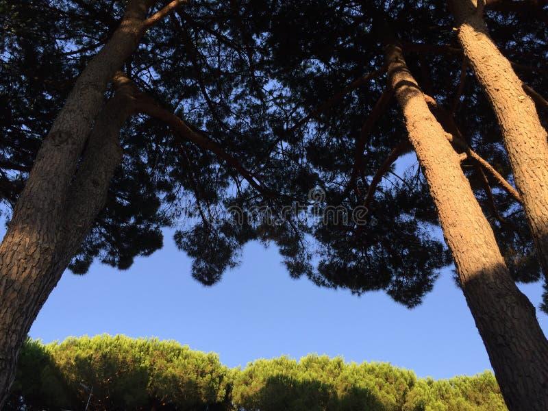 Голубое небо и деревья стоковые фото