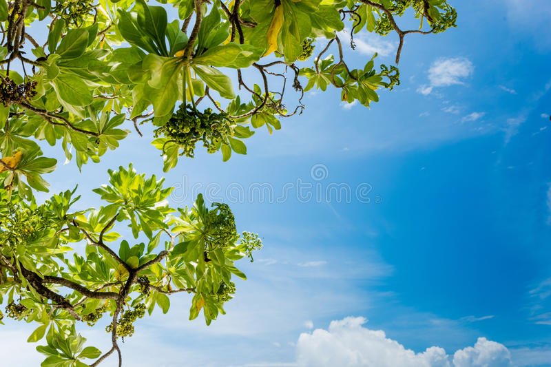 Голубое небо - Мальдивы стоковая фотография rf