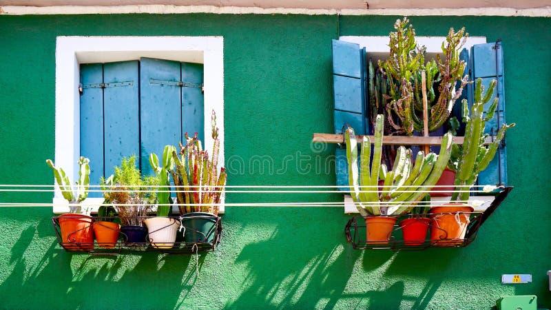 Голубое окно на зеленой стене с кактусом стоковые изображения