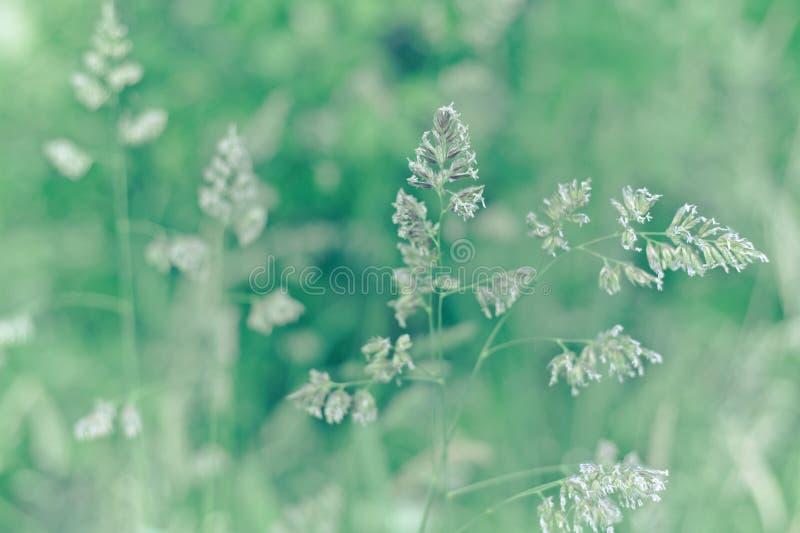 голубое поле цветет лето неба лужка травы вниз стоковые фотографии rf
