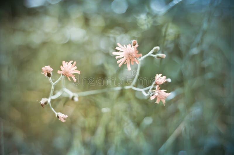 голубое поле цветет лето неба лужка травы вниз стоковое фото rf