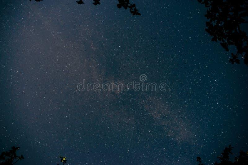 Голубое темное ночное небо с много звезд над полем деревьев стоковое фото
