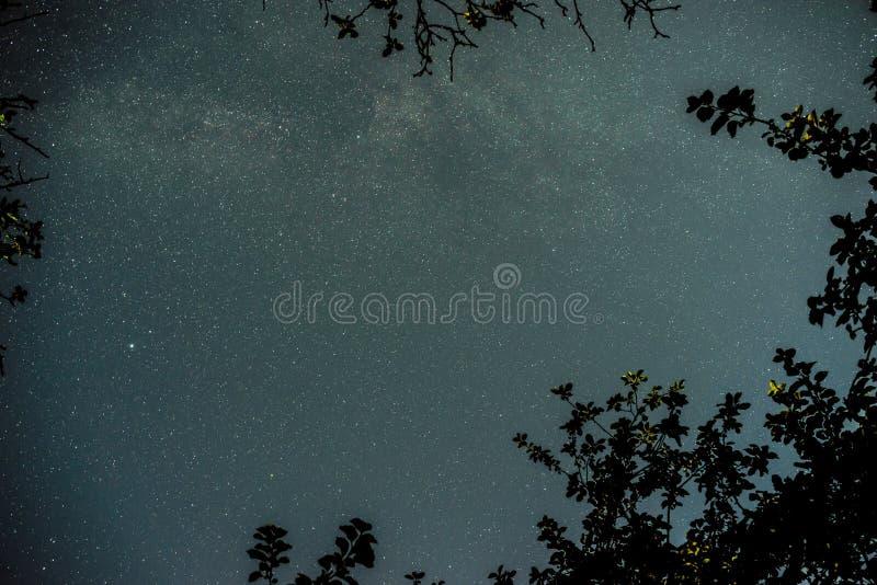 Голубое темное ночное небо с много звезд над полем деревьев стоковая фотография