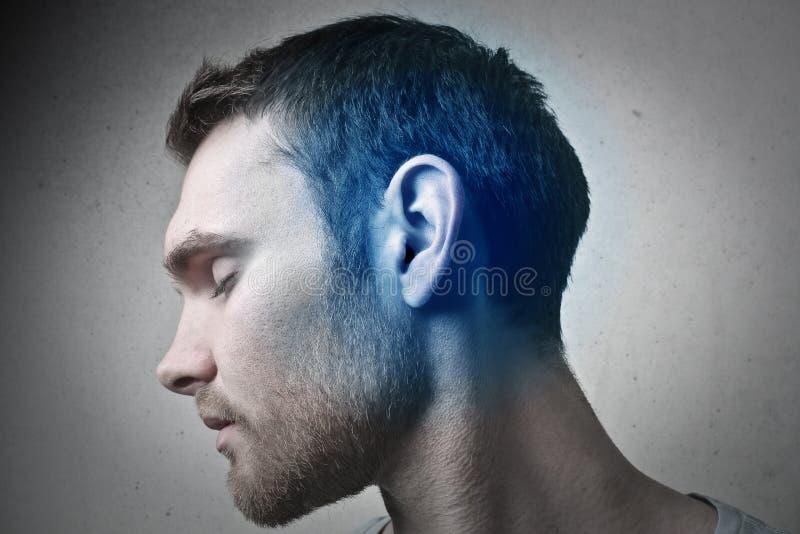 Голубое ухо стоковая фотография rf