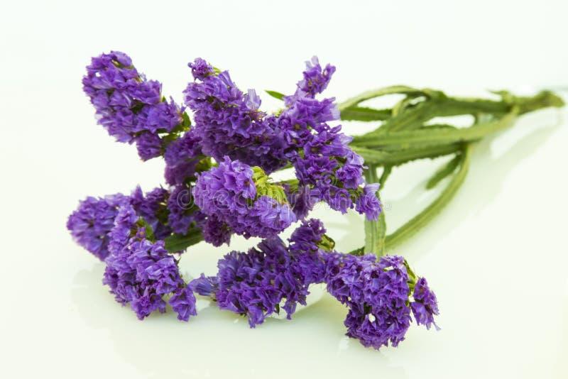 голубое фиолетовое statice изолированное на белой предпосылке стоковые фото