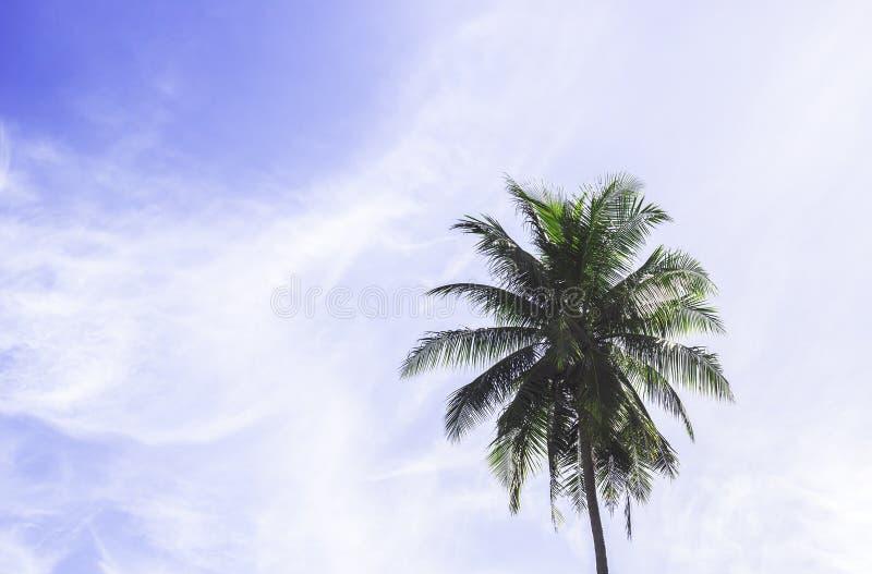голубой вал неба кокоса стоковая фотография