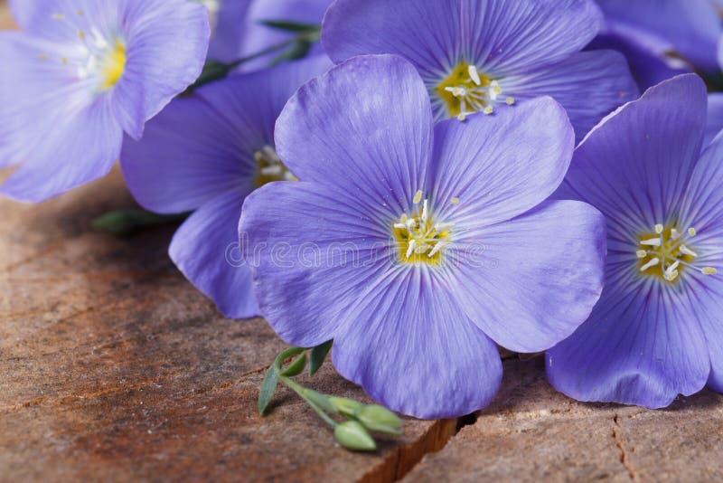 Download Голубой лен цветет макрос на старой деревянной доске Стоковое Фото - изображение насчитывающей кровопролитное, травяной: 41651210