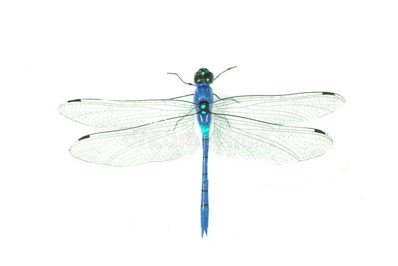 голубой изолированный dragonfly стоковое фото