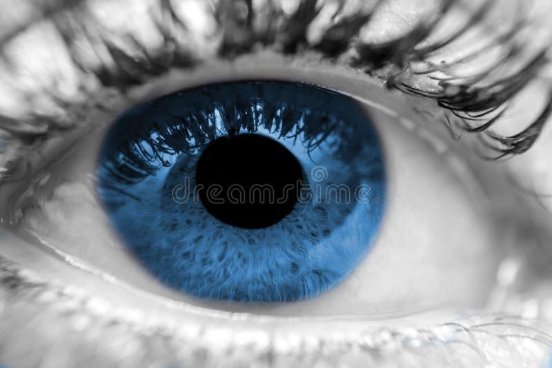 Голубой макрос человеческого глаза стоковые фотографии rf
