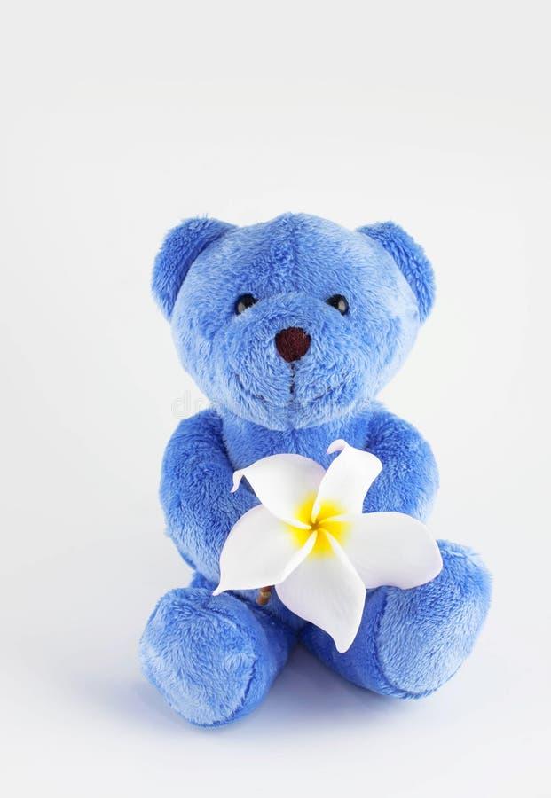 Голубой плюшевый медвежонок стоковые изображения