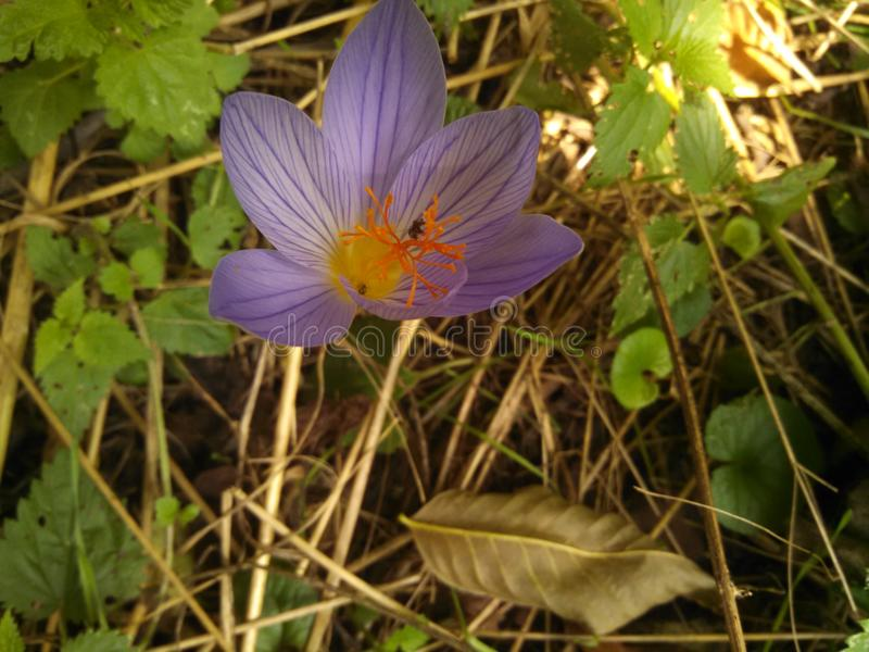 Голубой цветок с некоторым апельсином стоковое изображение