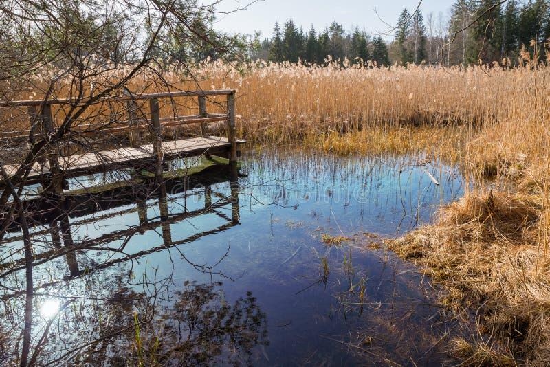 Голубой fount в болоте, туристическая достопримечательность osterseen стоковая фотография rf