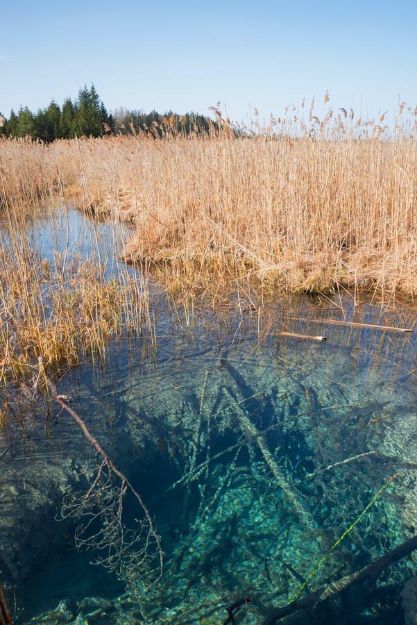 Голубой fount в болоте, туристическая достопримечательность osterseen стоковые фотографии rf