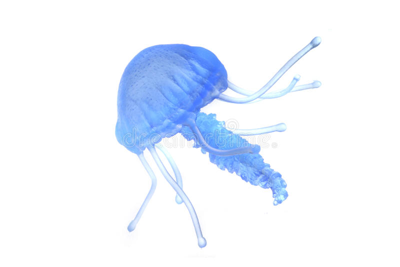 голубые изолированные медузы стоковые изображения rf