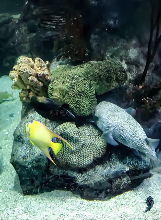 Голубые и желтые рыбы стоковая фотография