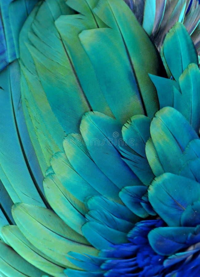 Download Голубые и зеленые пер стоковое фото. изображение насчитывающей фотоснимок - 81802726