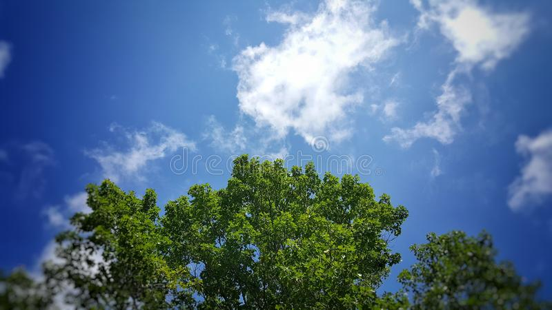 Голубые небеса и листья зеленого цвета стоковые изображения