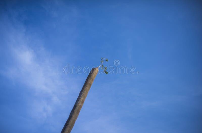 Голубые небо и новые растут стоковые фото
