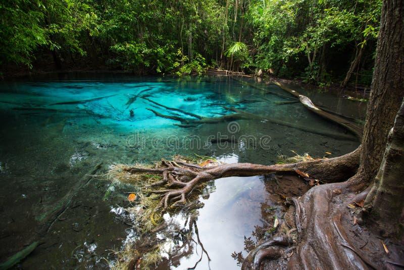 Голубые озеро и корень дерева в Таиланде стоковое изображение