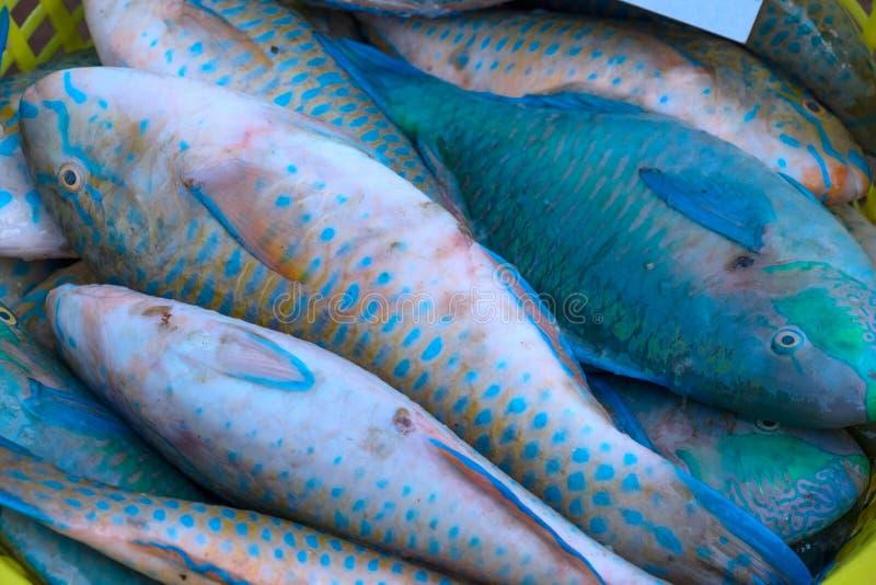 Голубые рыбы на уличном рынке стоковые фото