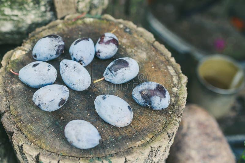 голубые сливы стоковое изображение rf