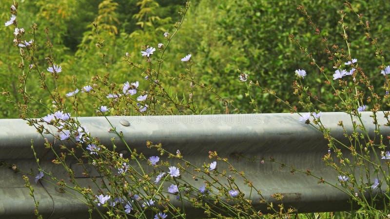 голубые цветки малые стоковая фотография rf