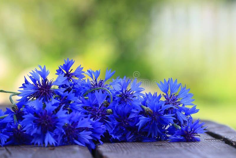 голубые цветки одичалые стоковое изображение rf