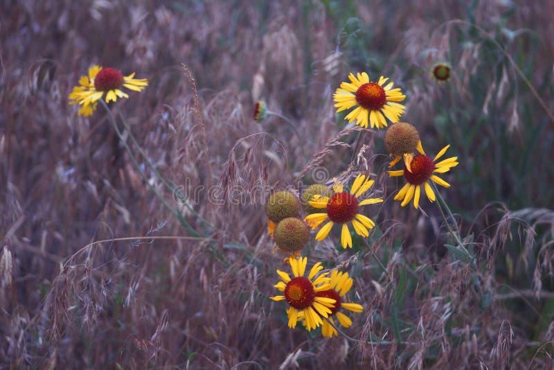 Голубые цветки часа стоковые фотографии rf